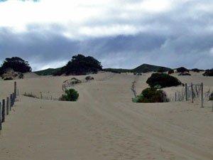 BH24, -35.015238, 117.038856 Defined track thru dunes